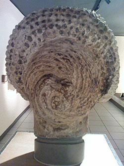 flavian lady rear